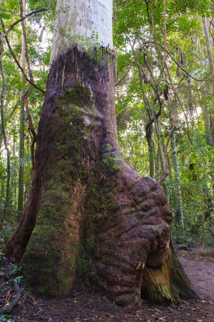 Tree near Curtis Falls